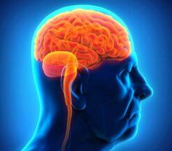 Brain & Aging